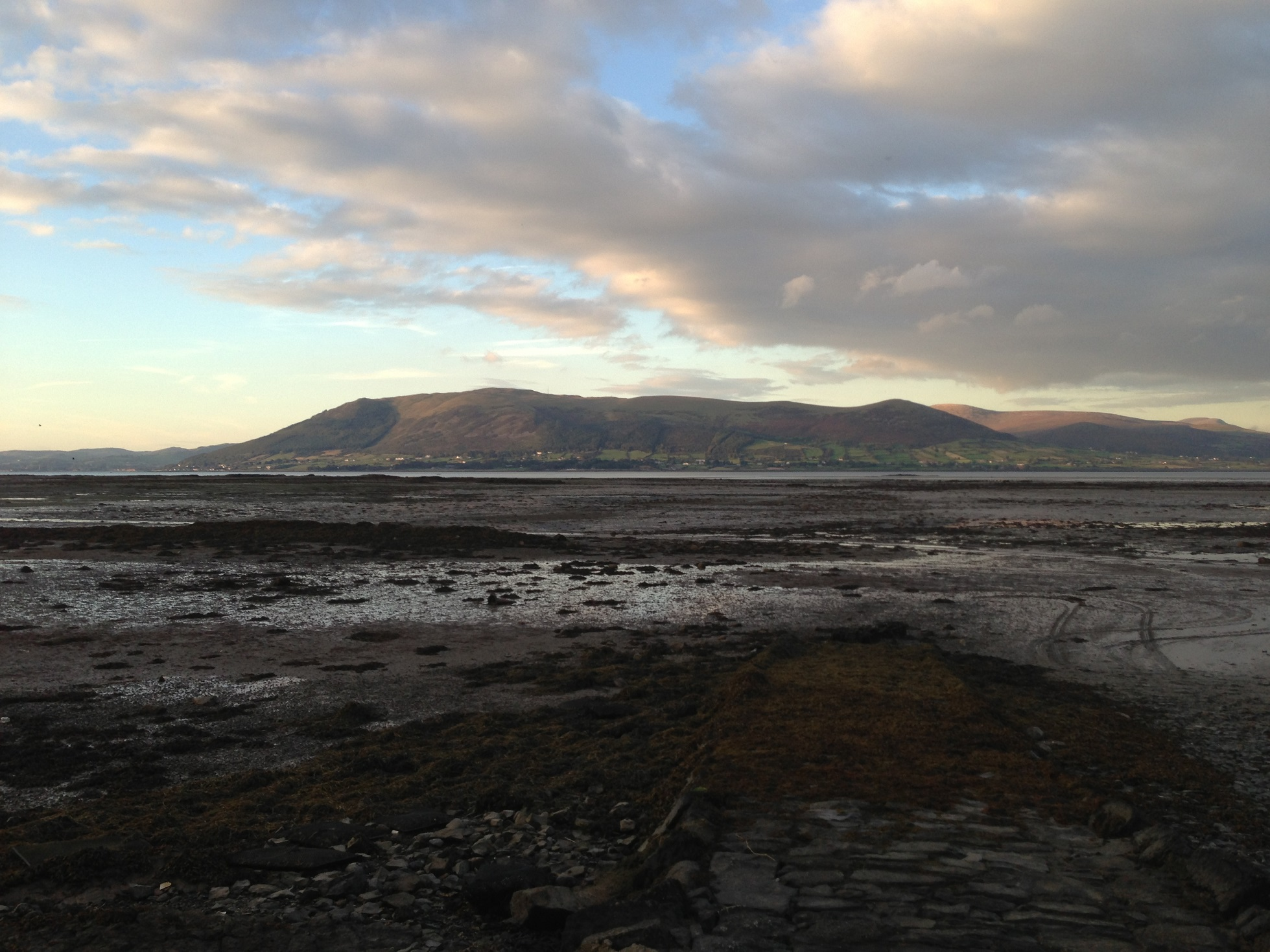 carlingford oysters