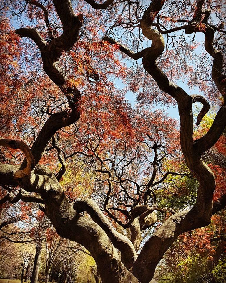 Tree_Vikki-Sarah-Margulies.jpg