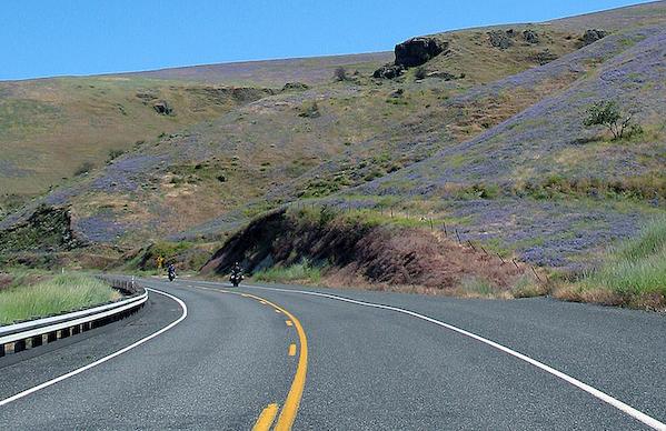 Riding_Through_Purple_Field.jpg