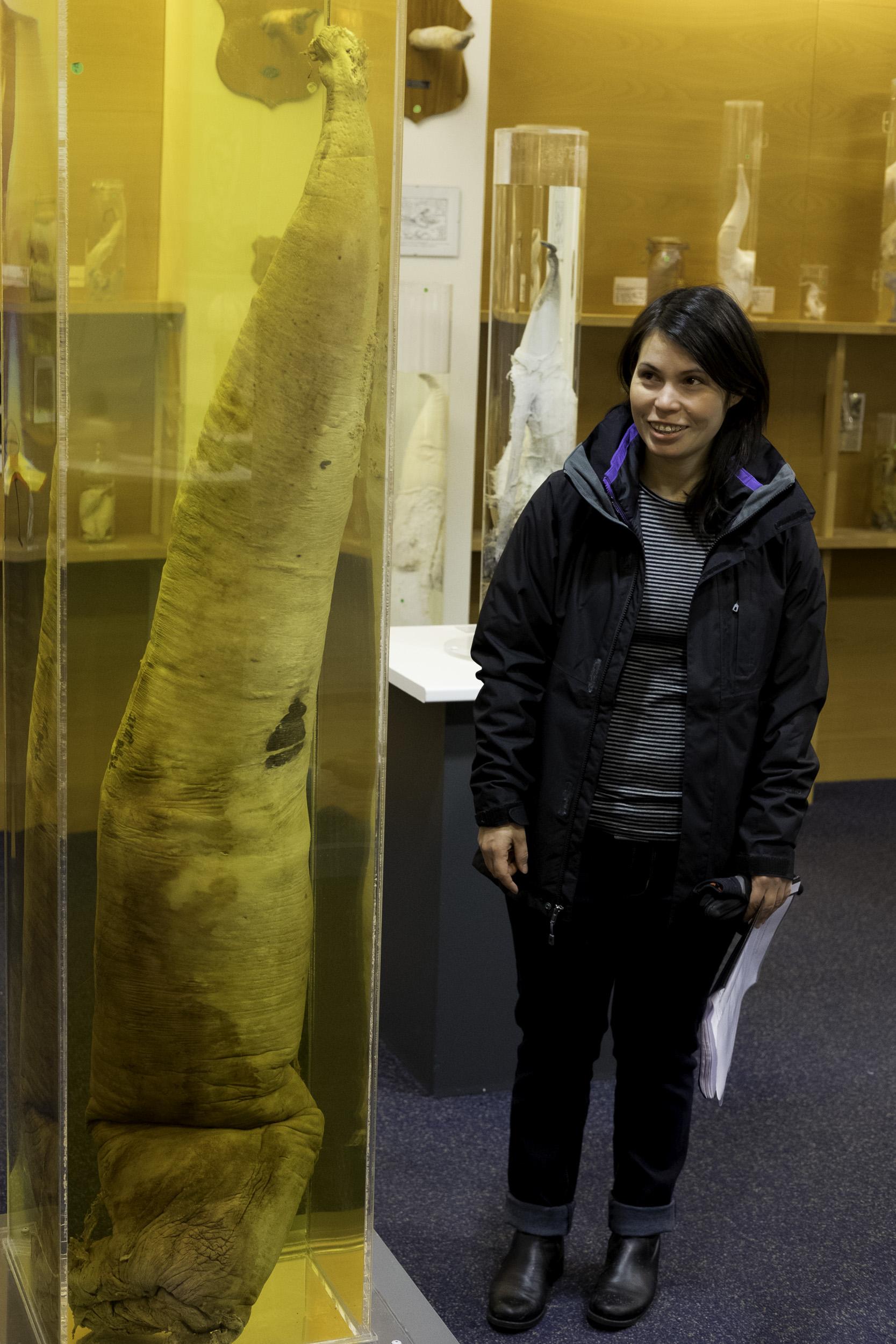 Sperm Whale Penis