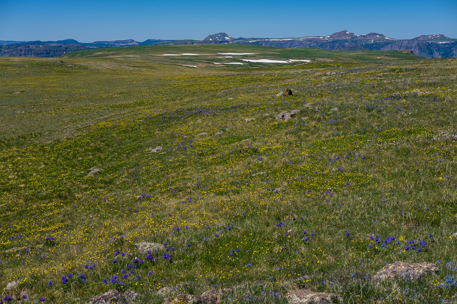The wildflowers were just a sight to behold