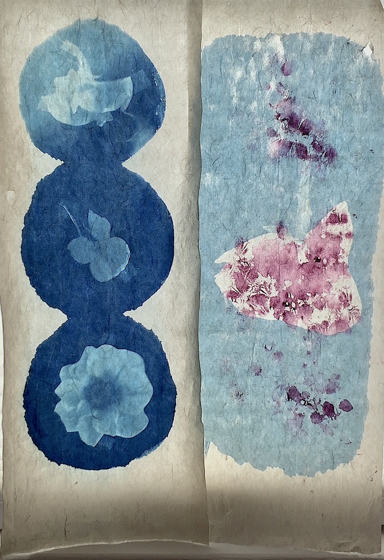cyanotypes on gampi washi paper