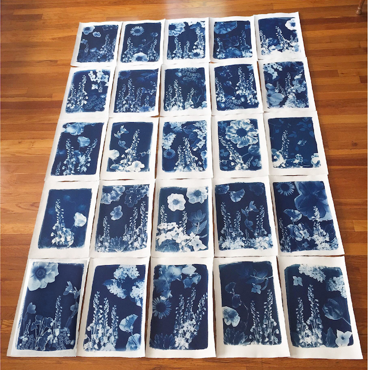 """I was selected to create a set of new, multiple artworks for the Community Supported Art program for 2018, an initiative of the Cambridge, MA Arts Council. Artworks can be purchased as part of an art share. My pieces are cyanotypes of original flower photos, on 20"""" x 15"""" linen/cotton paper (grouped together at left). Click on the Community Supported Art link above to find out how to purchase shares. -"""