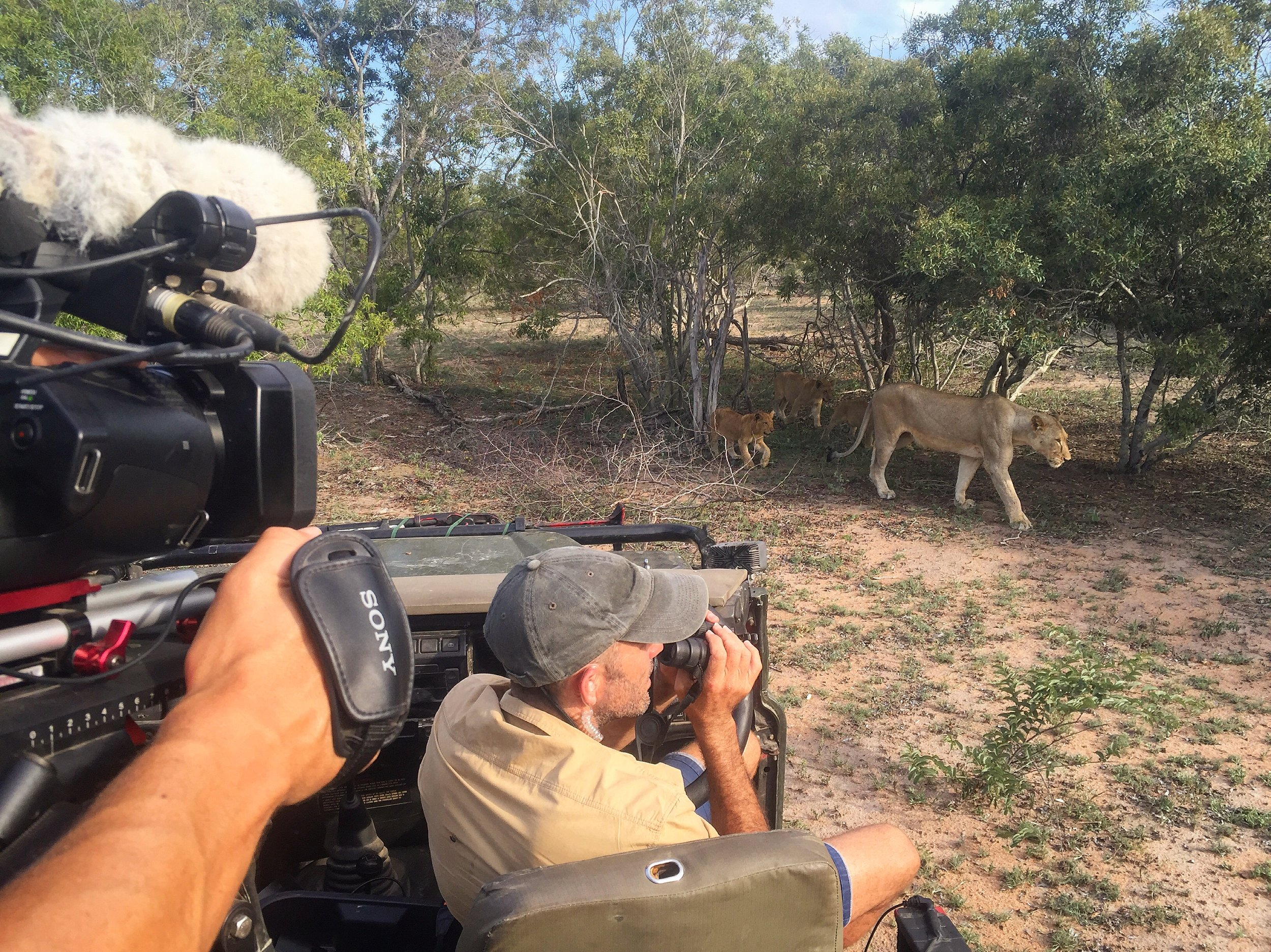 """""""This ain't your average everyday safari."""" Justin Grubb joined Nat Geo Wild presenter James Hendry on a live broadcast and found himself surrounded by a pride of lions."""