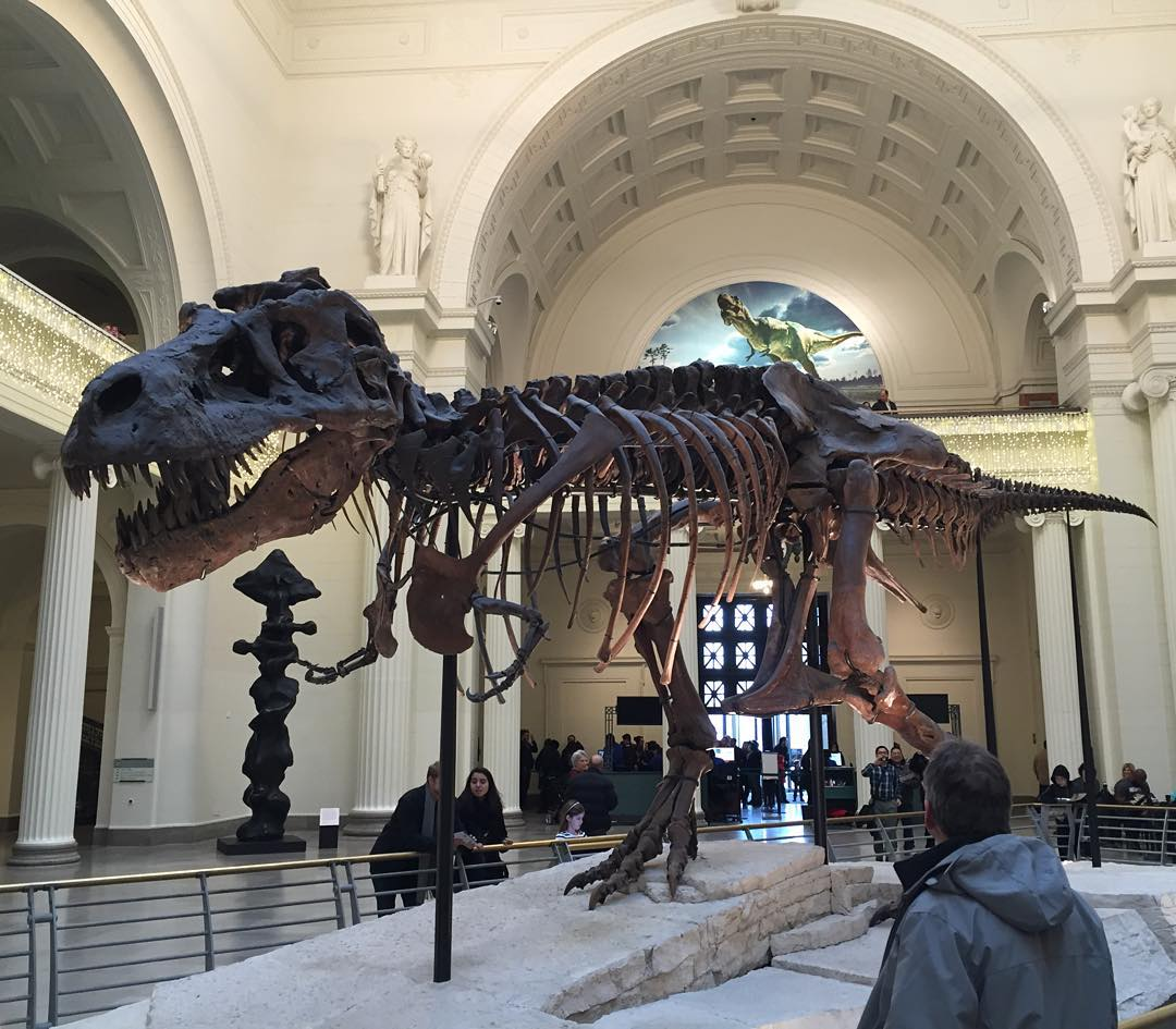 Visiting Chicago to see my bro and little sis in her first show as a professional dancer…and it's her birthday. Haven't been to the Field Museum in forever. Sue the T-Rex  #Chicago #fieldmuseum #trex #sue  http://ift.tt/1Jebmu1