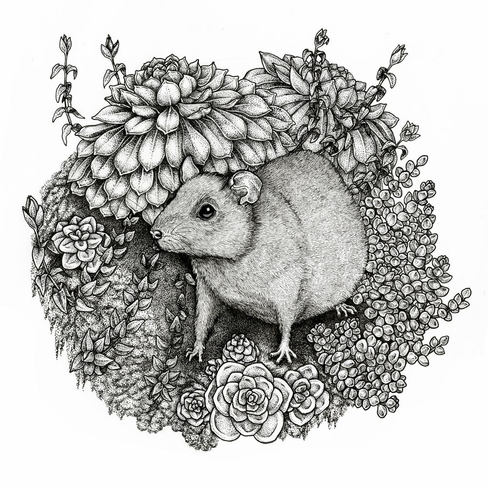Rat and Succulents