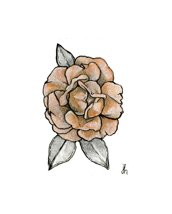 rose study #02