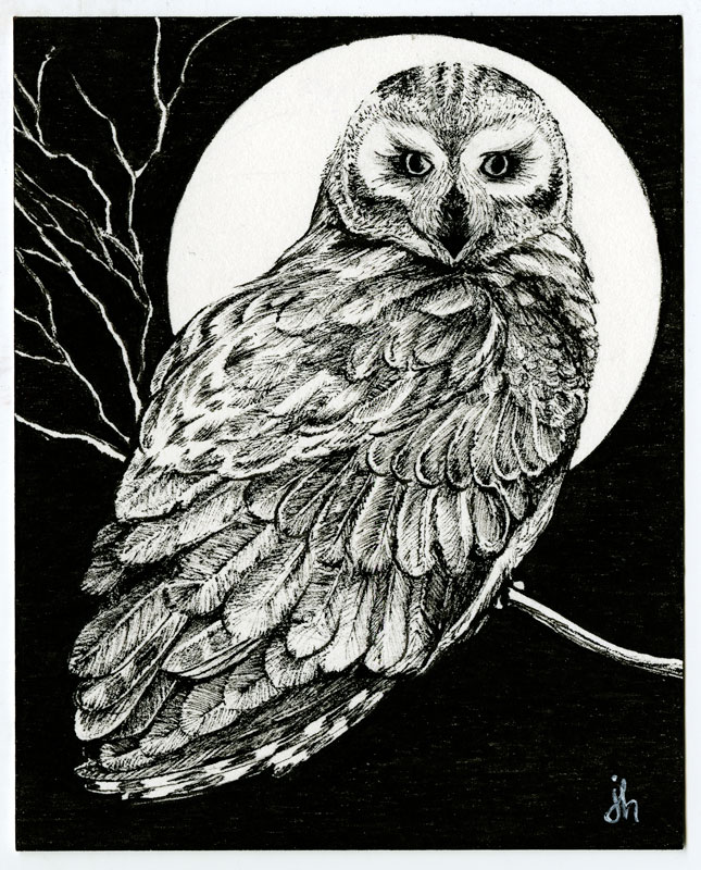 owl-2019.jpg