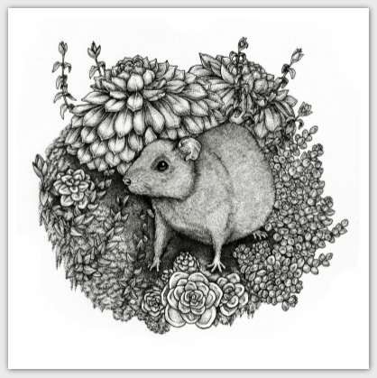 square-postcard-rat-succulents.png