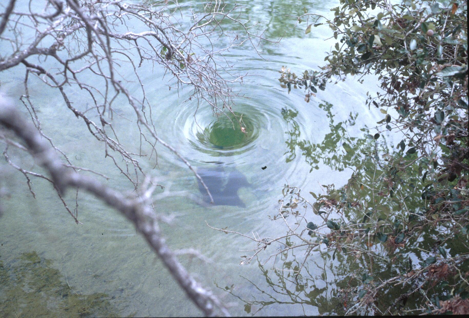 Whirlpool over Crippled Crawfish Cave