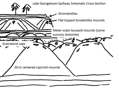 Exposures of Cretaceous carbonates at the Lake Georgetown spillway, Williamson County, Texas provide a rare three dimensional view of vertical and lateral changes in Upper Albian rudist communities.