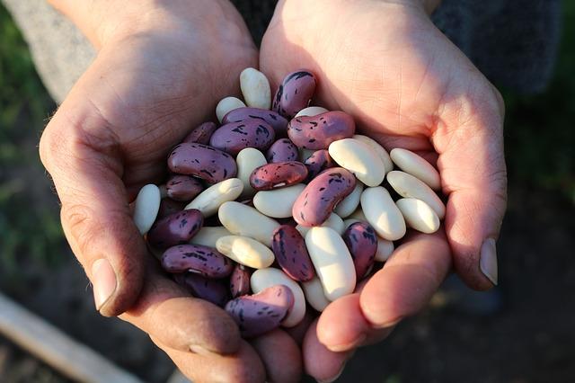 runner-beans-1835646_640.jpg