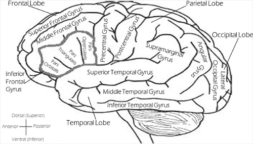 brain-2026346_640.png