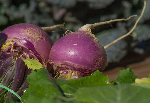 pink turnips-2097780_640.jpg