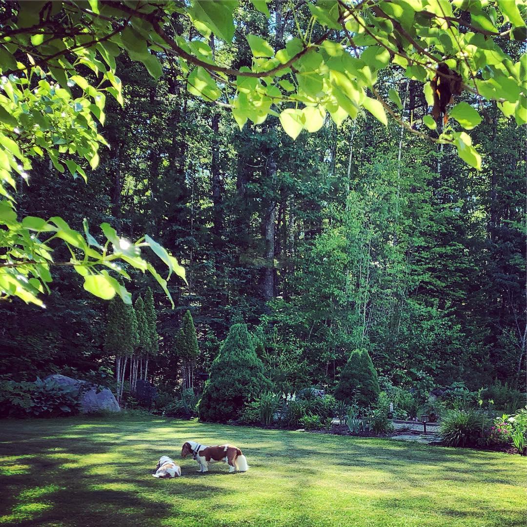 Blenheim Park Scene 11.jpg