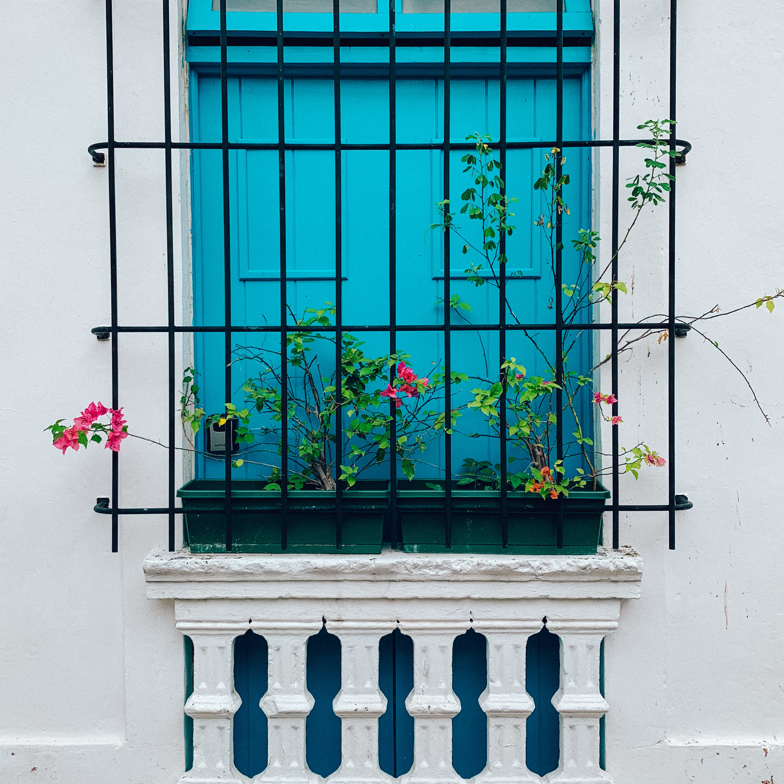 Vibrant blue walls and pink flowers in Santo Domingo, Dominican Republic