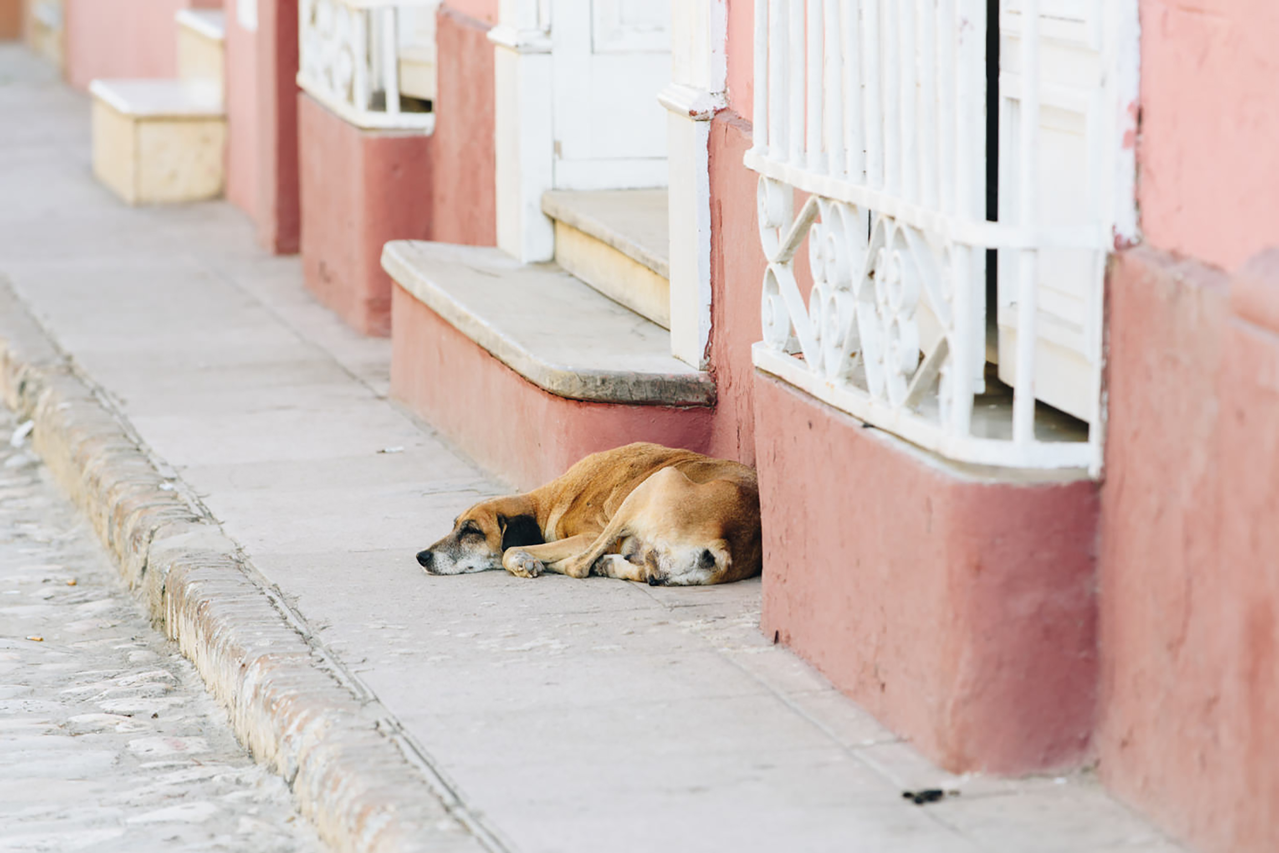 Dog sleeping on sidewalk in Cuba