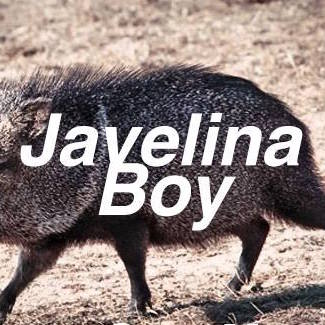 Javelina Boy - The sleep specialist enters soundlessly. She is an angular woman, whose glasses and movements give her the appearance of a mantis. He can't take his eyes off her.Madcap Review - Issue 6