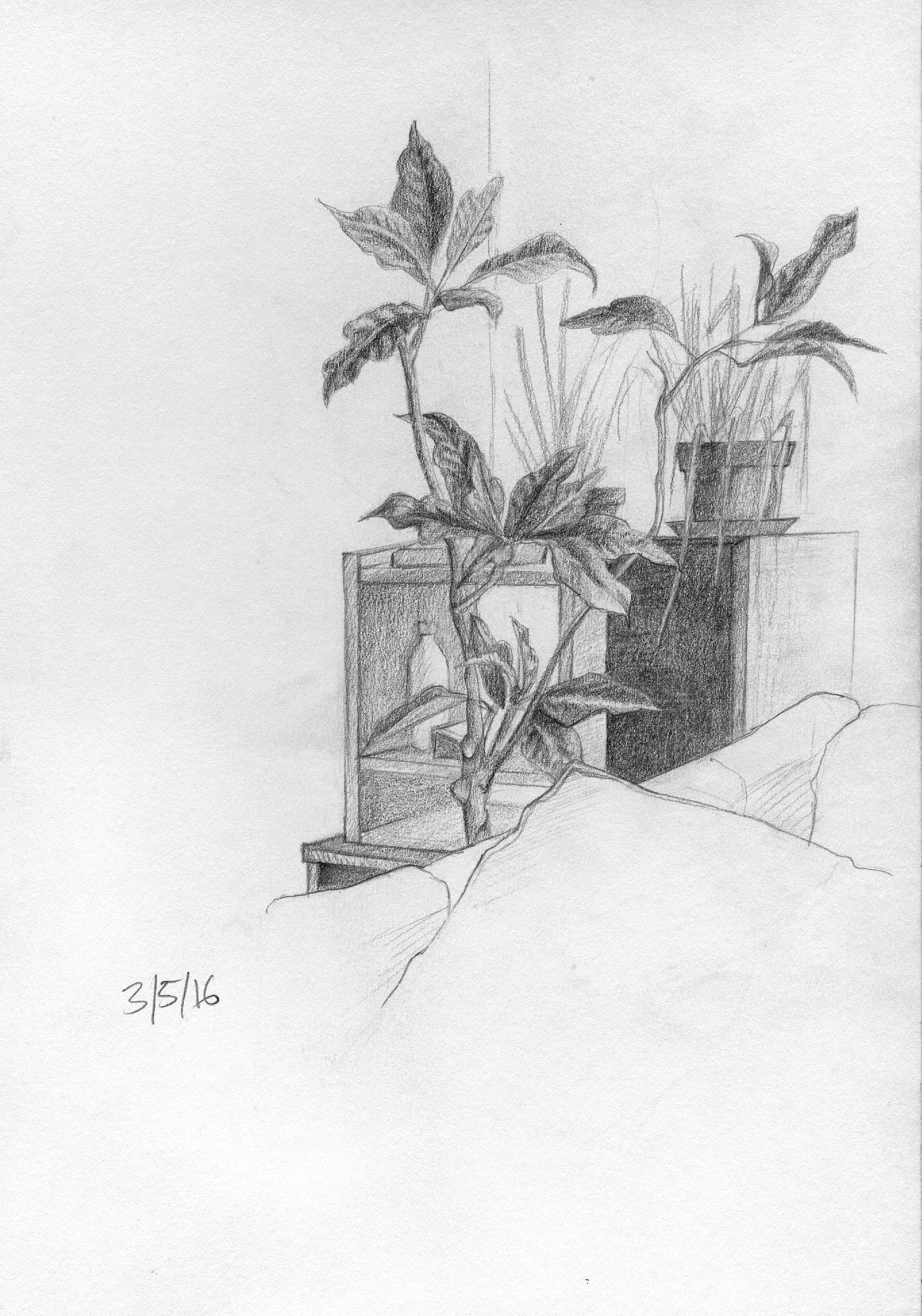 DDP-03-05-16.jpg