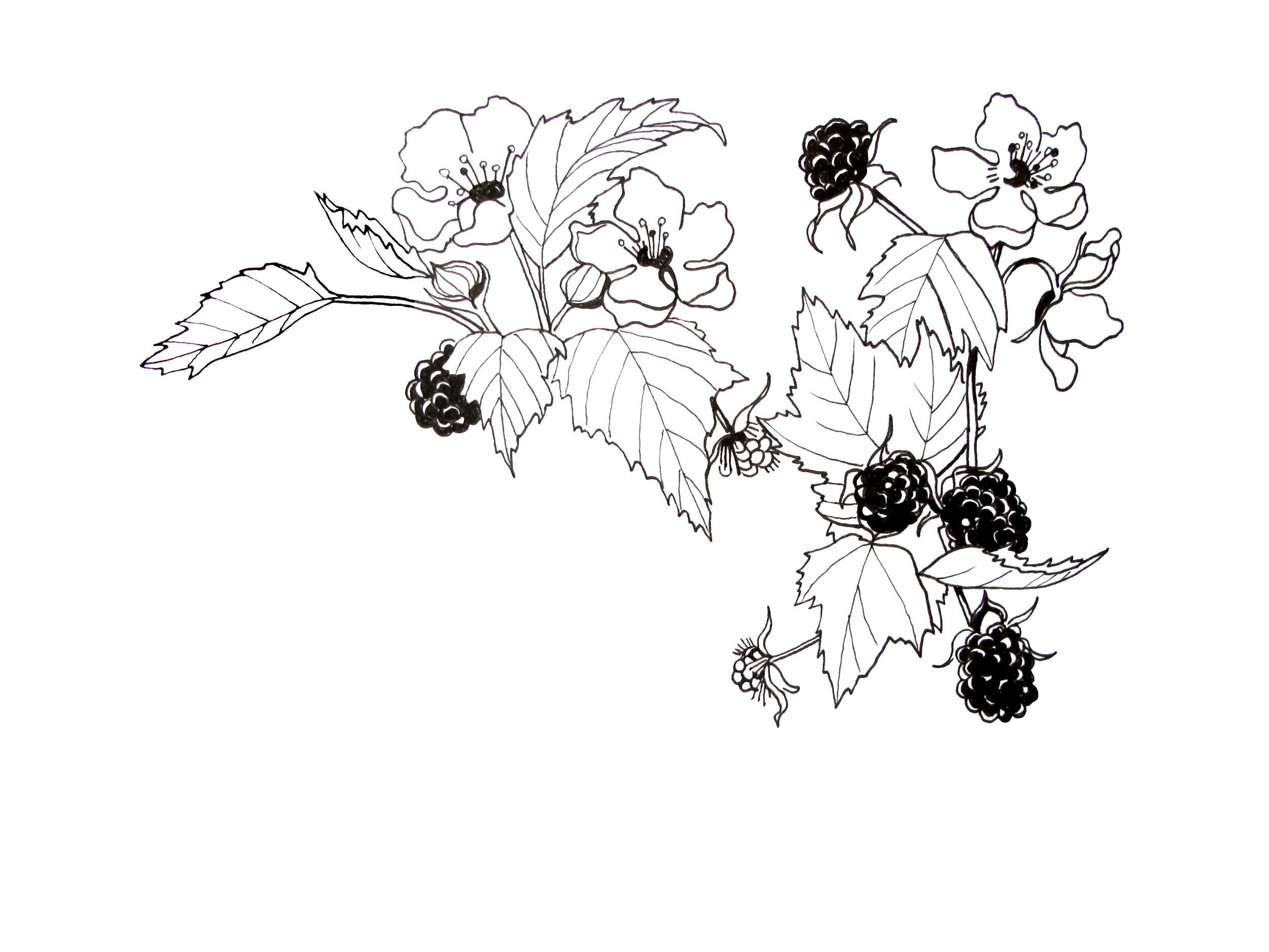 blackberry branch copy.jpg