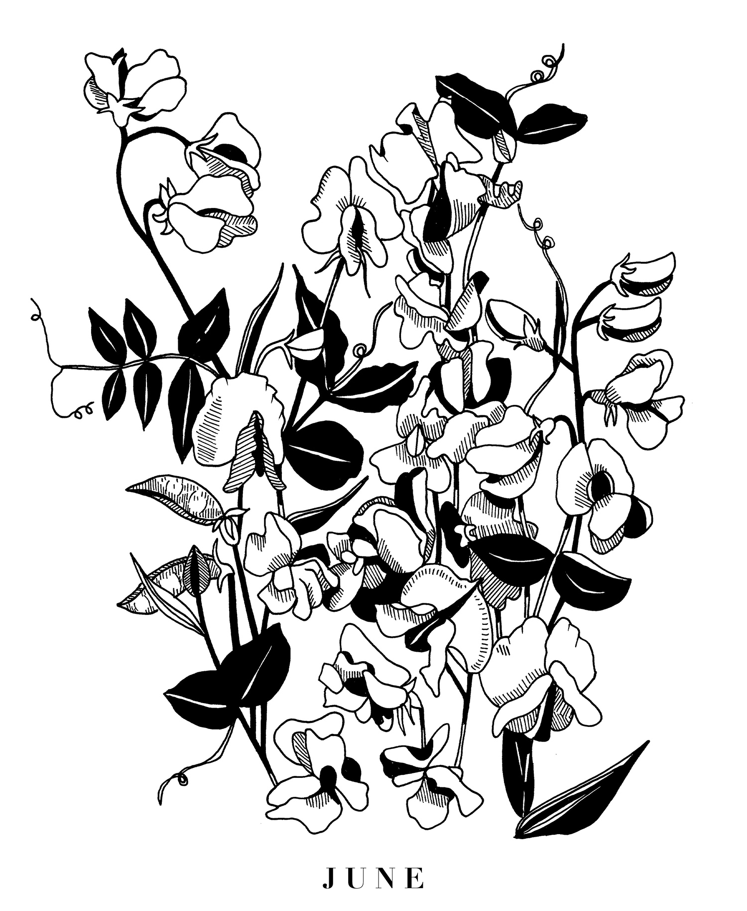 sweet peas small.jpg