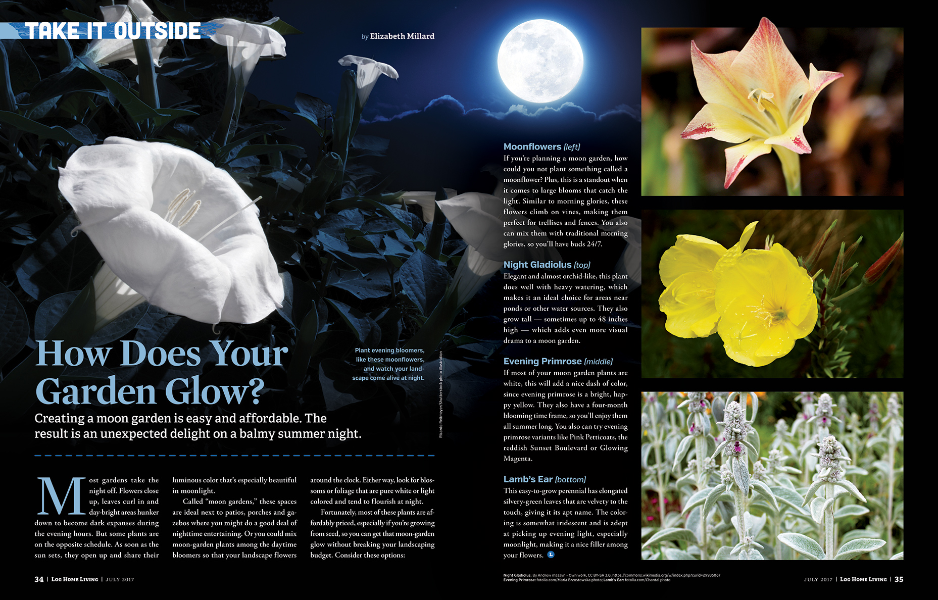 How Does Your Garden Glow?