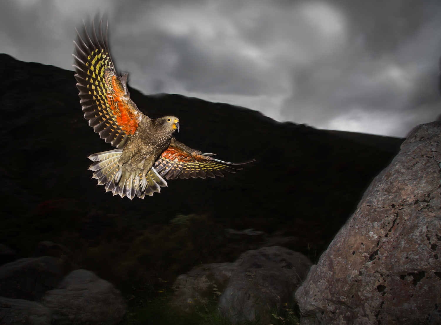 Kea in flight