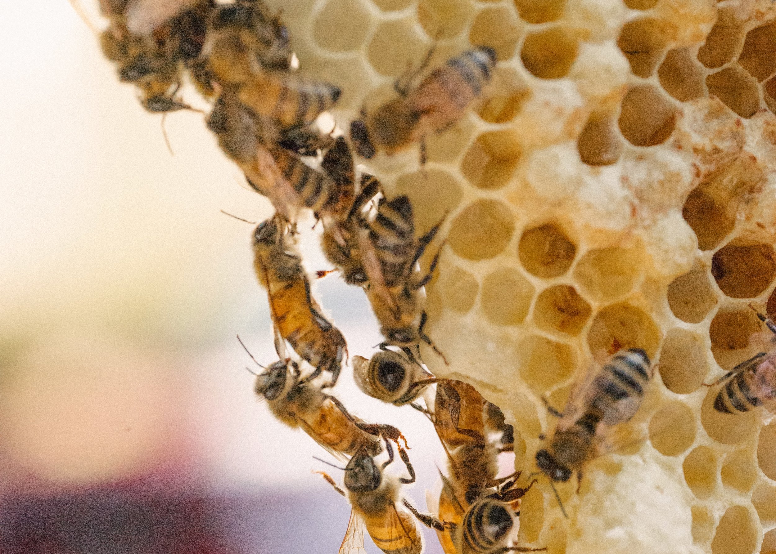 The Great Divide: Foundation vs  Foundationless Beekeeping