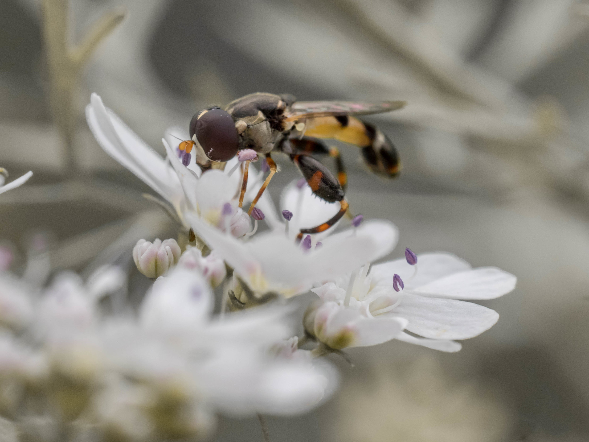   Bee & Bloom