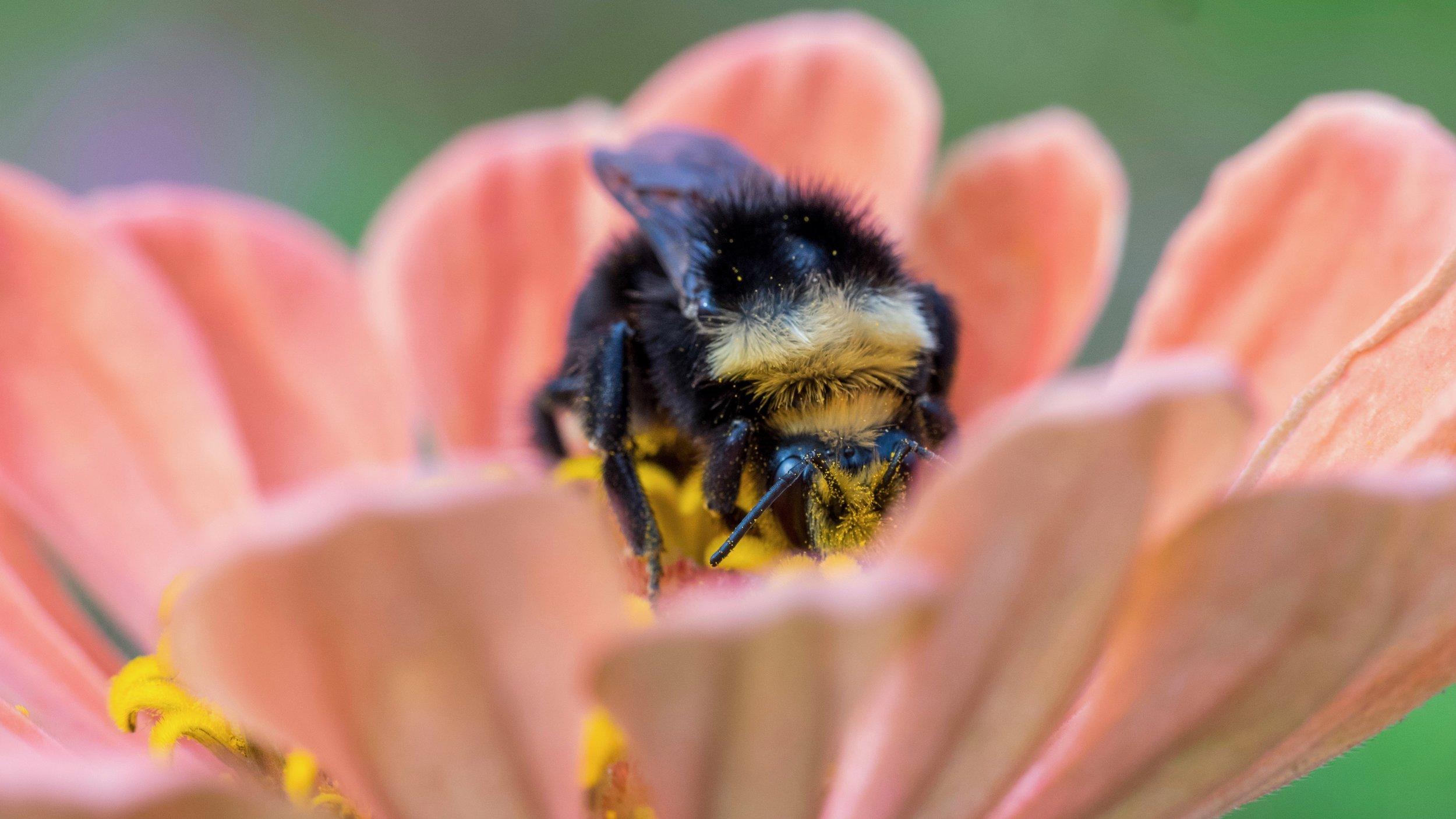 | Bee & Bloom