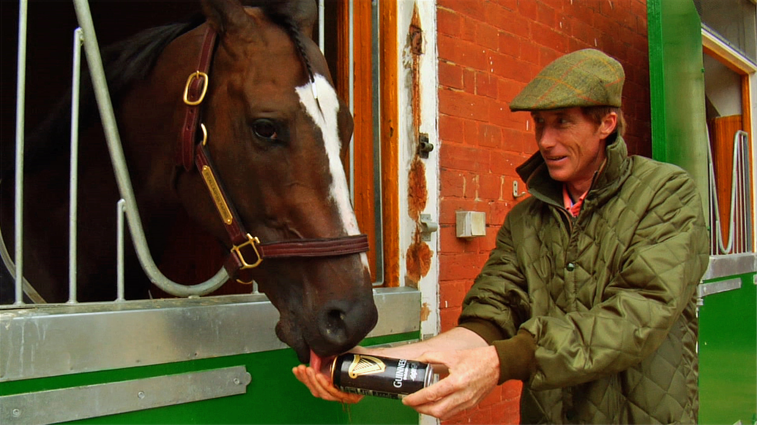 "Trainer Carl O'Callaghan gives Kinsale King a pint of Guinness beer in the documentary ""Chasing the Win."" (Indie Rights)"