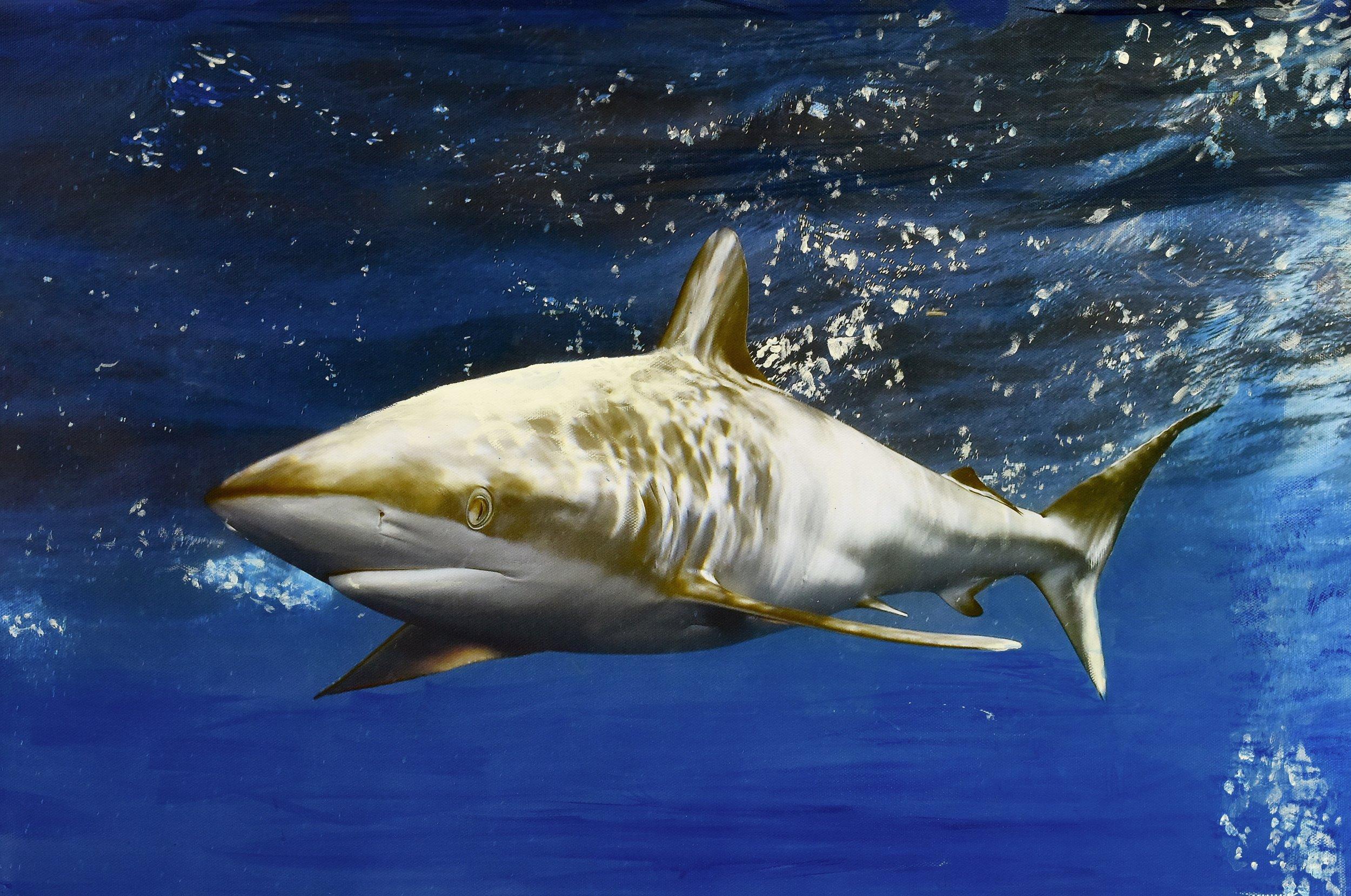 Cuba Sharks mixed media.jpg