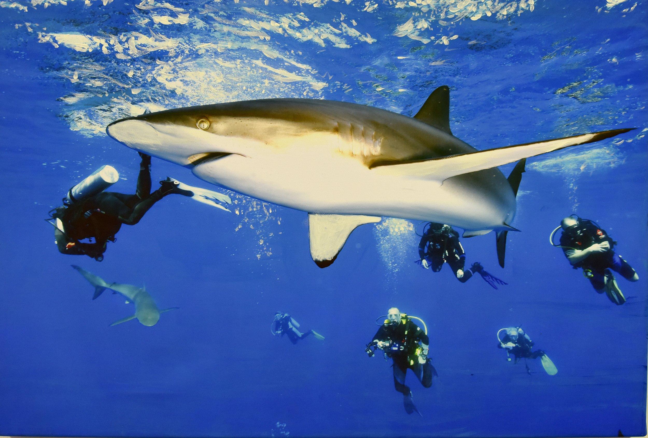Cuba Sharks.jpg