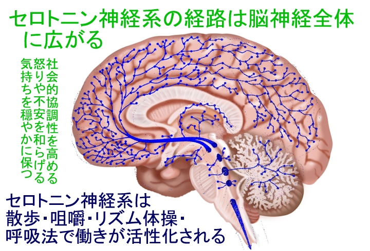cerotonin01.jpg