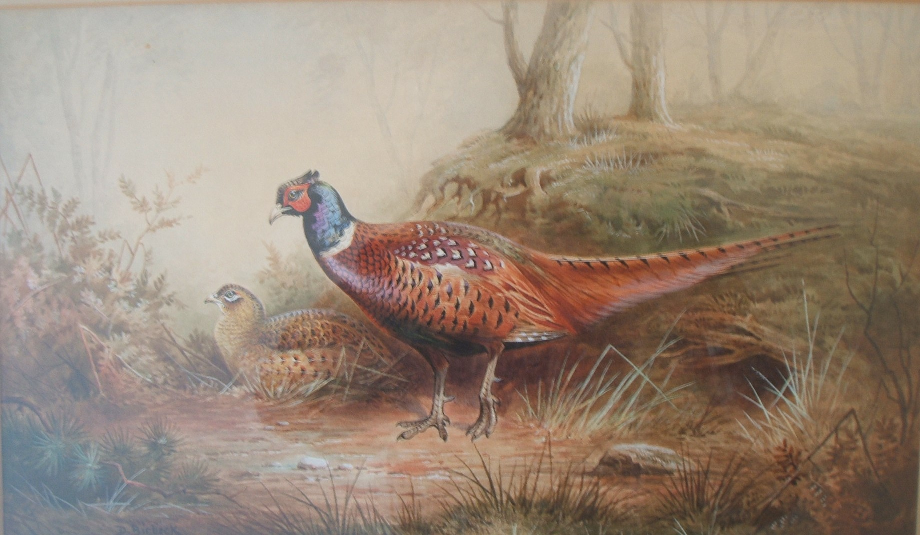 royal-crown-derby-pheasants-by-donald-birbeck