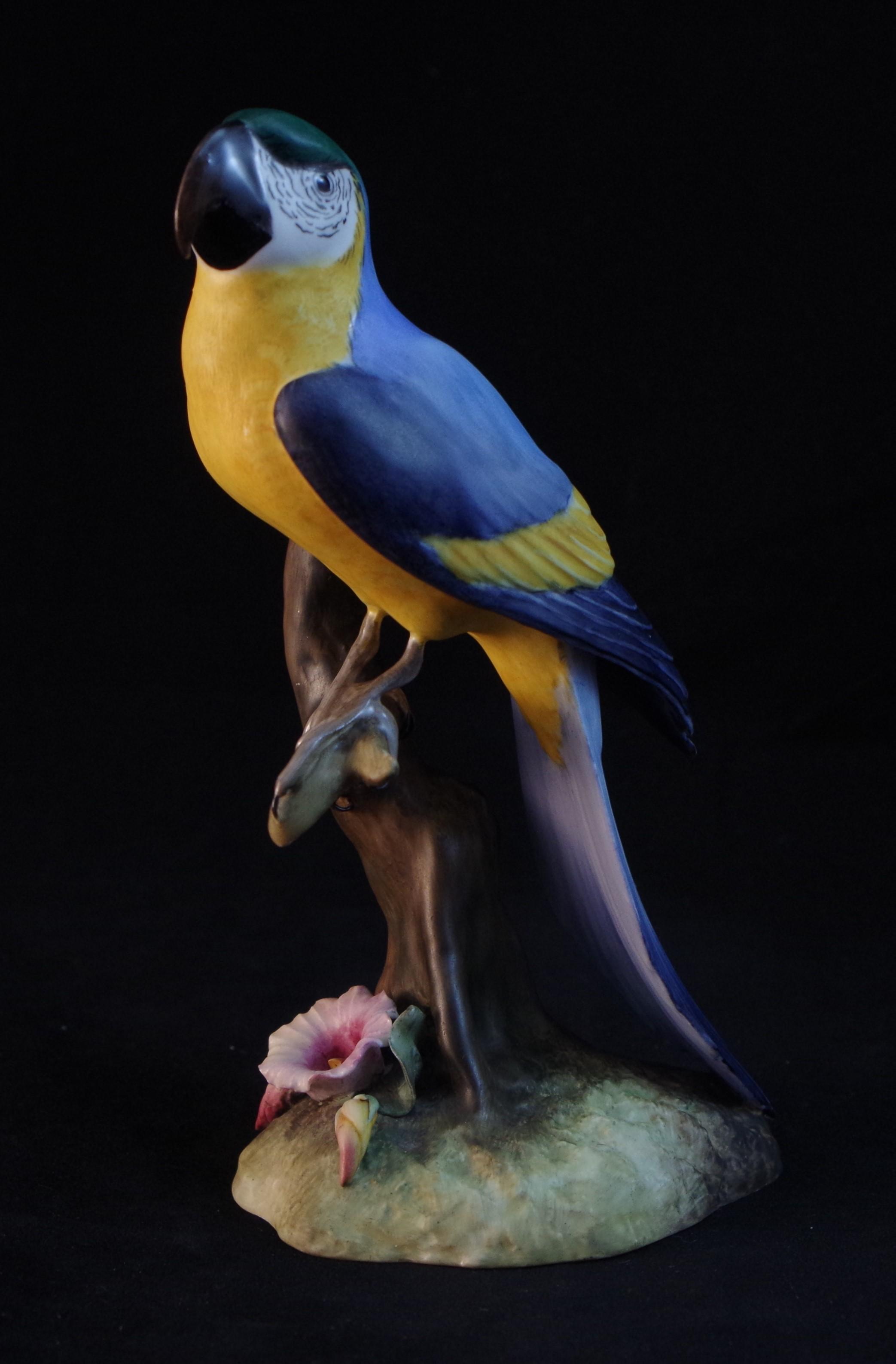Macaw F554