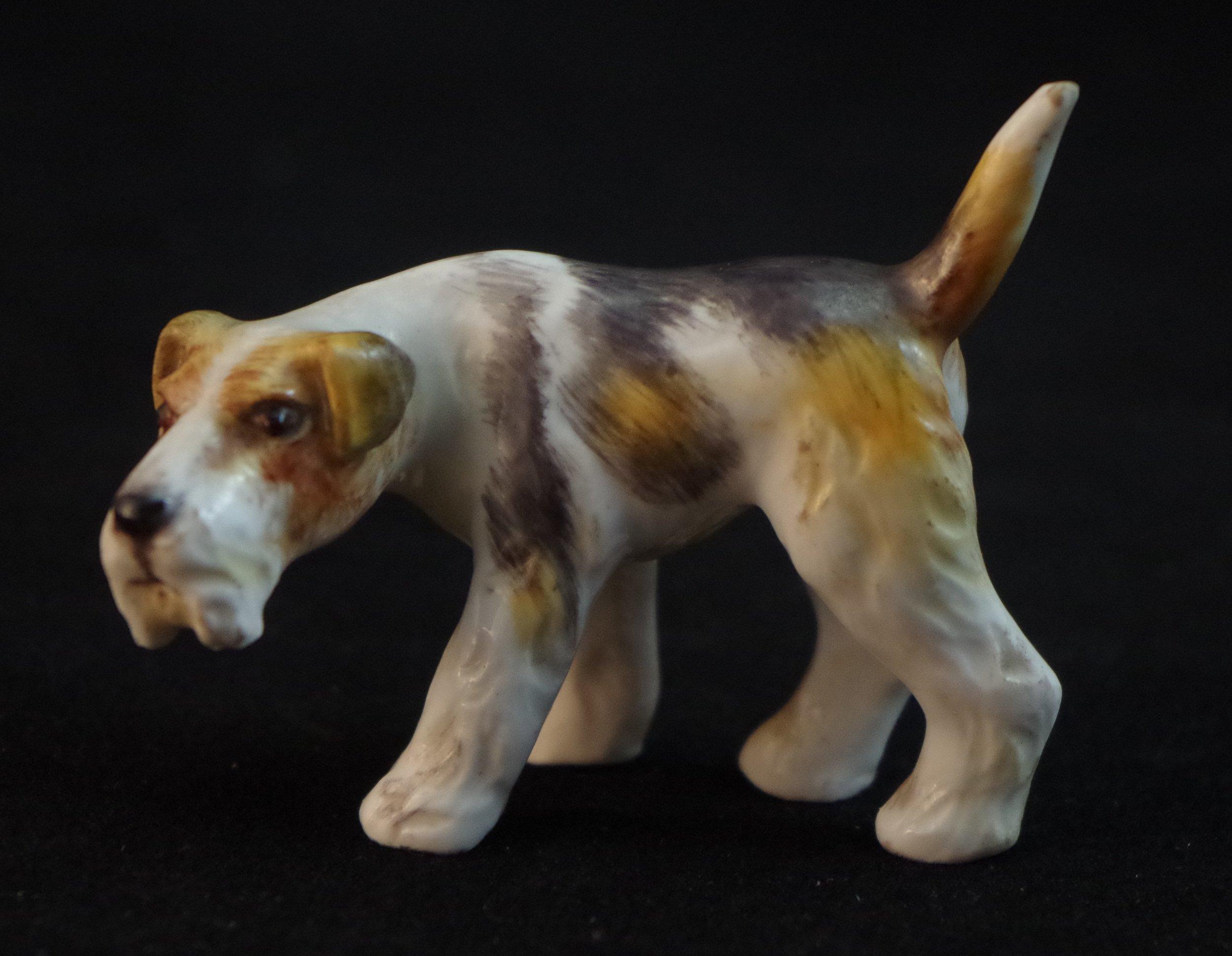 Terrier Puppy F528a