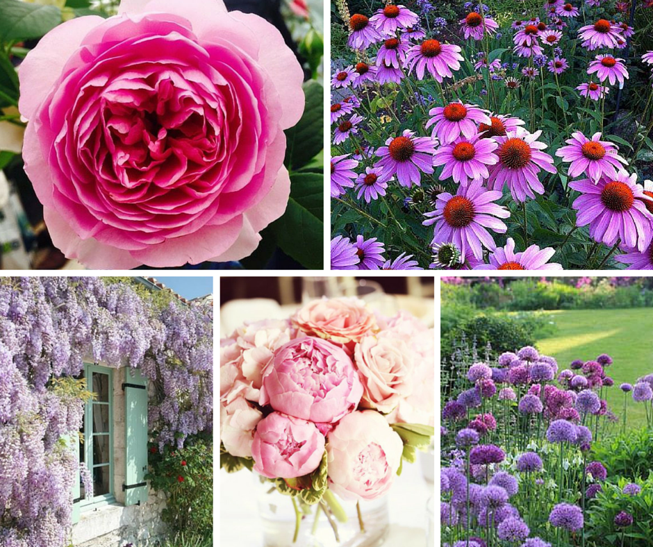 Clockwise from top: David Austin Rose, Echinacia, Alliums, Peonies and Wisteria.