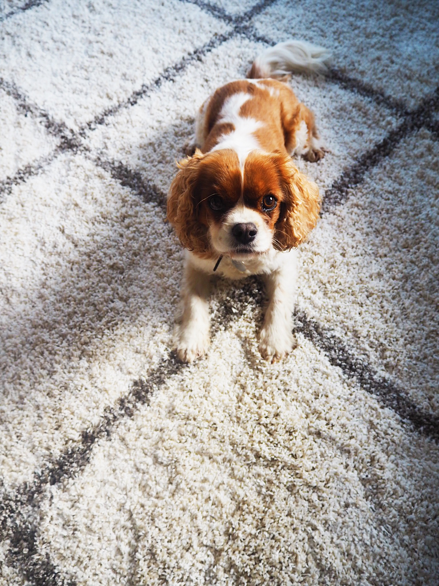 My dog loves rolling about on this high pile rug from Safavieh