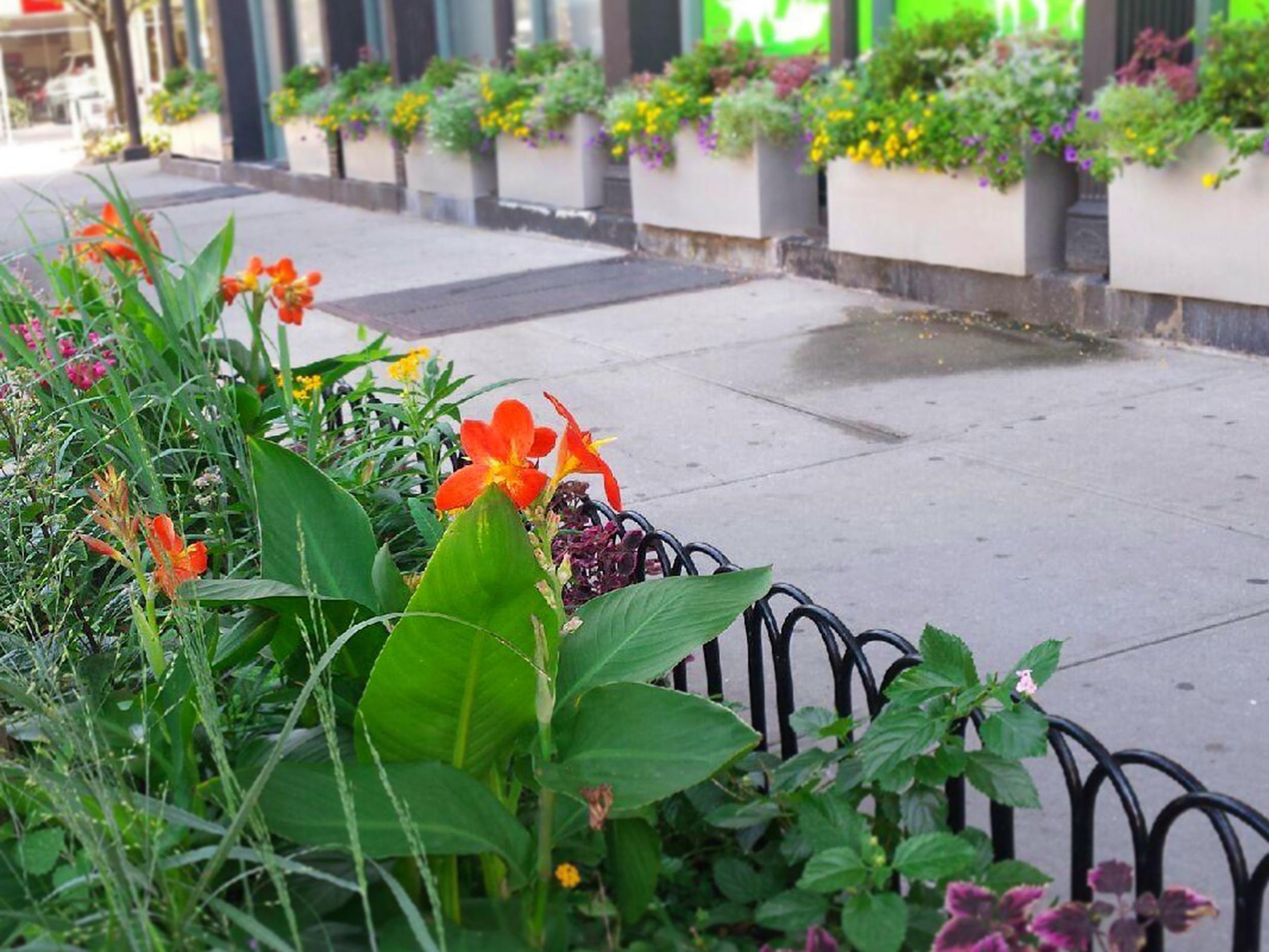 Street Plantings