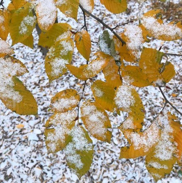 snowleaves.JPG