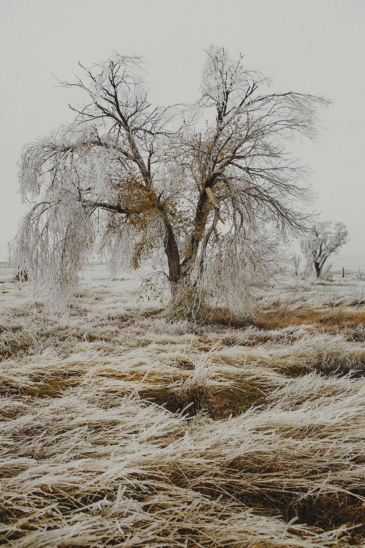 mls13-marfa-ice-storm-1.jpg