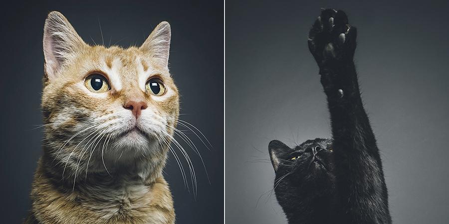 Cats-stch.jpg