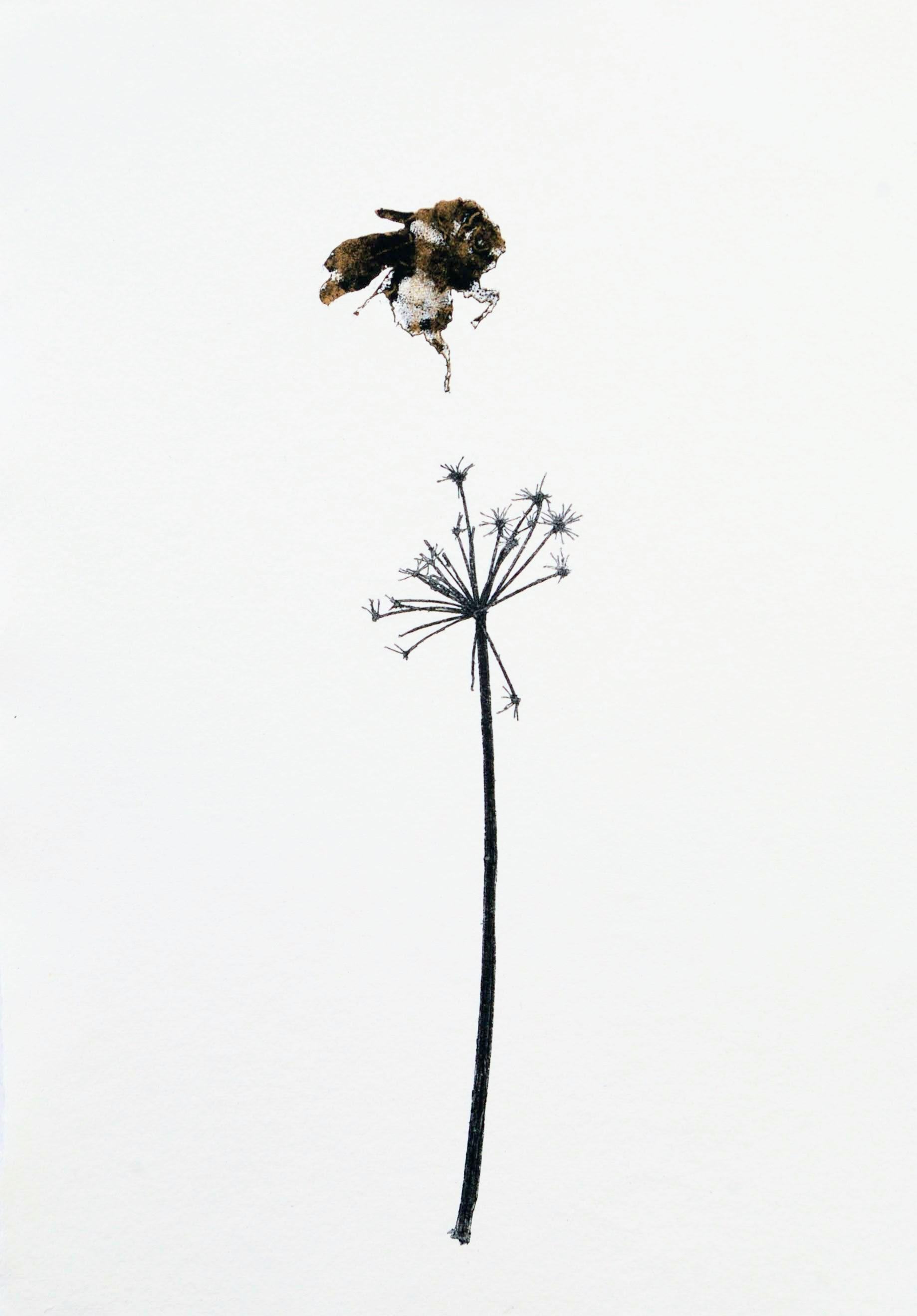 Cow Parsley & Bee II