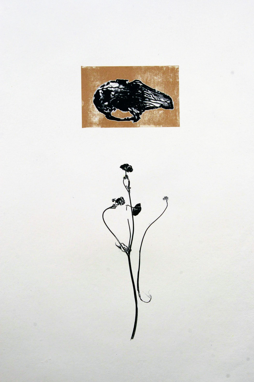 Rabbit Skull & Buttercup II