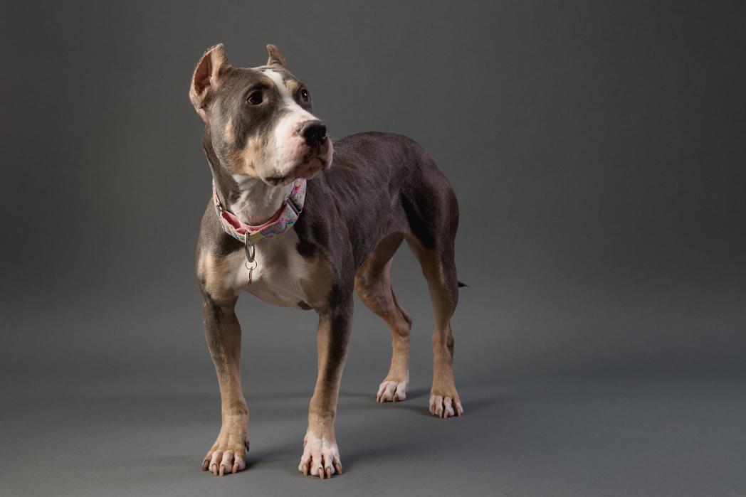 shelter dog-2.jpg