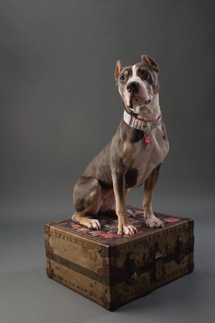 shelter dog-3.jpg