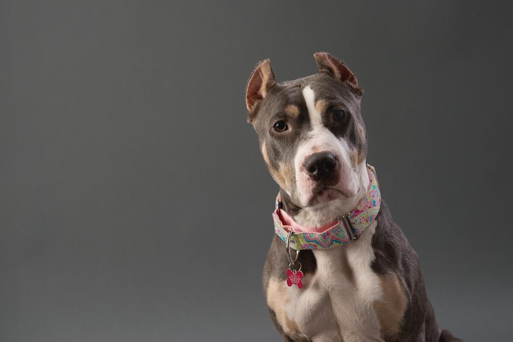 shelter dog-1.jpg