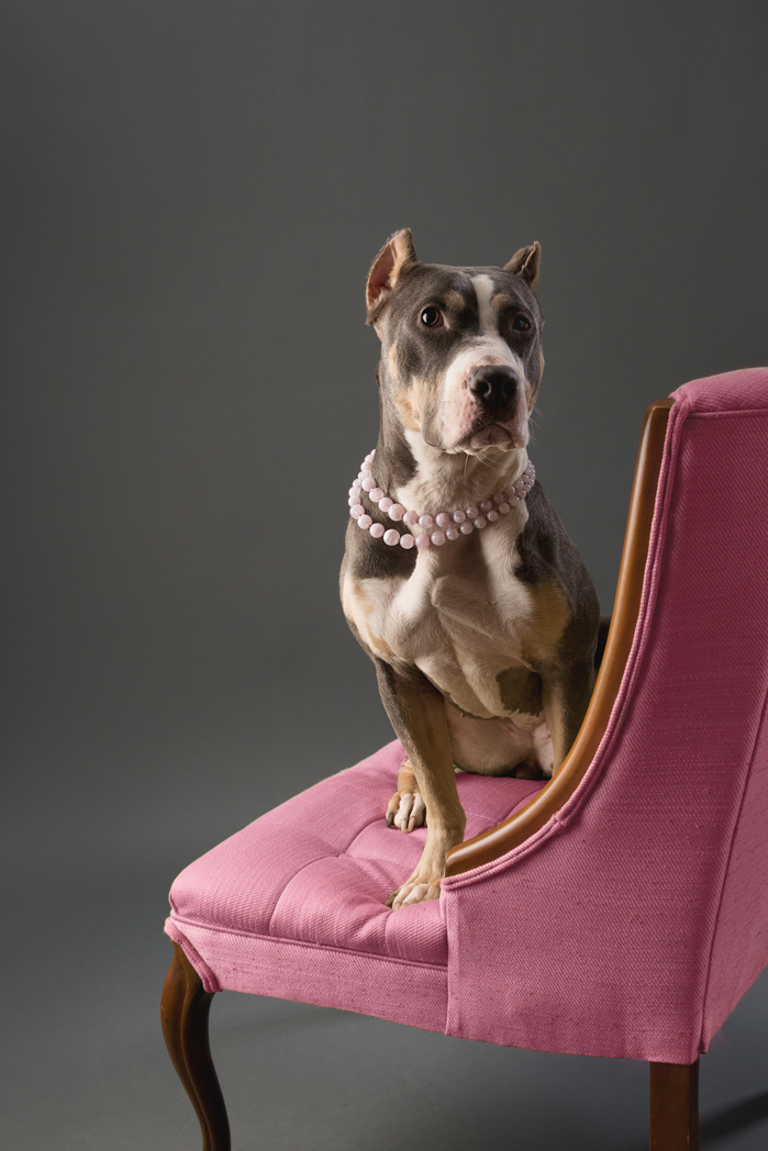 shelter dog-6.jpg