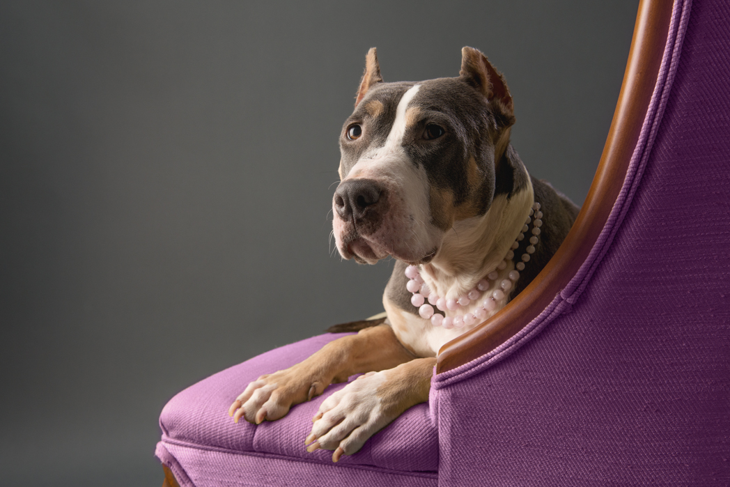 shelter dog-8.jpg